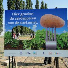 Netherlands Works to Deregulate Cisgenesis