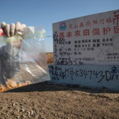 Illegal Chinese GMO Corn Runs Rampant