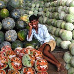Monsanto GMO Patent on Melons Denied