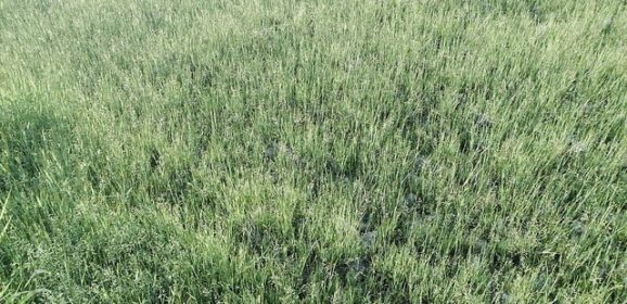 EPA Launches Superweeds GMO Investigation